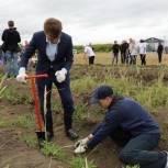 Более 12 тысяч тысяч саженцев лиственницы и кедра высадили в Уссурийске