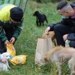 В Тульской и Оренбургской областях волонтеры собрали корма для бездомных животных