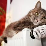 В Москве заработала горячая линия по вопросам отопления