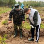 Смоленские молодогвардейцы присоединились к акции «Сохраним лес»