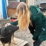 Единый волонтёрский штаб помогает животным