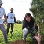 Партийцы, сторонники и молодогвардейцы Сергиева Посада приняли участие в ежегодной акции «Наш лес»