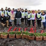 Всероссийская акция «Сохраним лес» прошла в Мурманской области