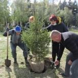 «Единая Россия» высадила хвойные деревья в сквере «Памяти и скорби» в Уйском районе