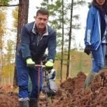 Андрей Чернышев: Лесовосстановление – одна из приоритетных экологических задач региона