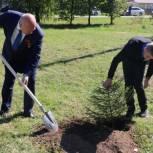 В Путятинском районе высадили ели в память о герое последнего боя Второй мировой войны