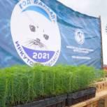 В Чунском районе будет высажено около 5000 саженцев ангарской сосны