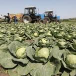 В Оренбуржье идет сбор овощей открытого грунта