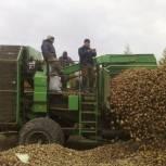 Аграрии Пензенской области завершили уборку картофеля