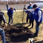Единороссы Ишима присоединились к акции по посадке деревьев