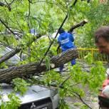 Члены и сторонники партии «Единая Россия» помогли устранять последствия урагана в Реутове
