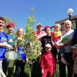 Пять тысяч долгопрудненцев приняли участие в озеленении родного города в рамках акции «Лес Победы»
