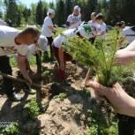 Единороссы Рузского городского округа высадили «Лес Победы»