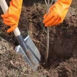 Представители «Единой России» в рамках всероссийской акции по озеленению городов высадят 3 млн деревьев
