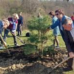 Единороссы из Десеновского  высаживают  деревья