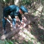 Алексей Баранов прокомментировал правила сбора недревесных лесных ресурсов на территории Костромской области