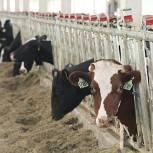 В сельхозорганизациях Пензенской области отмечается рост производства в отрасли животноводства