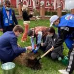 Партийцы городского округа Котельники приняли участие в акции «Сад памяти»