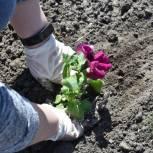 На День Победы партийцы сажали цветы и деревья в районах области