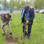 Луховицкие активисты партпроекта «Городская среда» высадили березы во дворе жилого дома