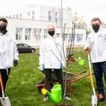 3 тысячи саженцев украсили городской округ Солнечногорск в рамках акции «Лес Победы»