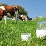 Томская область лидирует в Сибири по молочной продуктивности