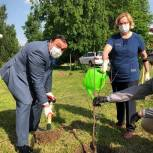 Лариса Лазутина вместе с партийцами посадила плодовые деревья возле Перхушковской больницы