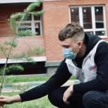 По инициативе волонтеров в городе Новомосковск Тульской области создается сквер Победы