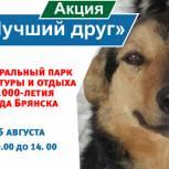 Ольга Полякова: Мы хотим привлечь внимание общественности к проблемам бездомных животных
