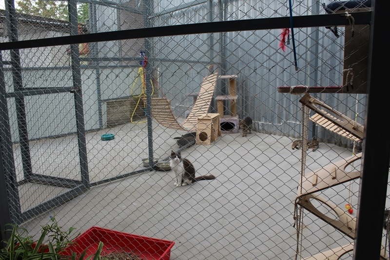 Кубанские сторонники партии «Единая Россия» посетили приют для бездомных животных